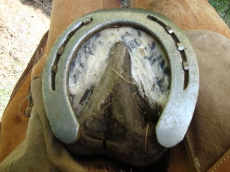 Bottom view hoof with new shoe02