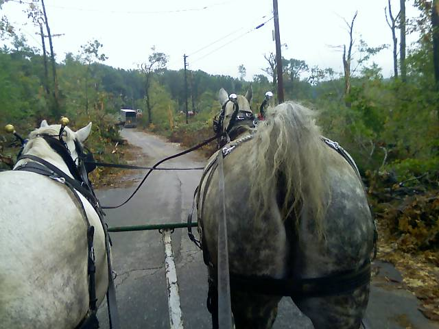 Horses rear tornado damage